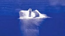 surrogacy-polar-bear